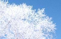 ハッカ樹氷-7.jpg